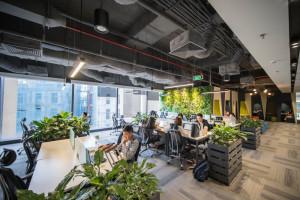 Làm không gian văn phòng đẹp hơn nhờ cây xanh