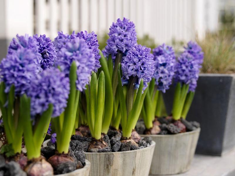 Gợi ý một số loại hoa phù hợp với phong thủy văn phòng