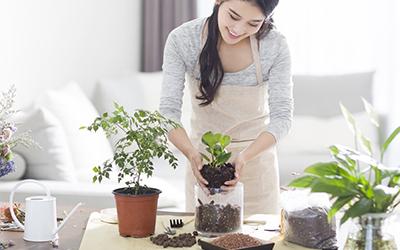 Cách chăm sóc các loại cây để bàn làm việc trong thời tiết lạnh